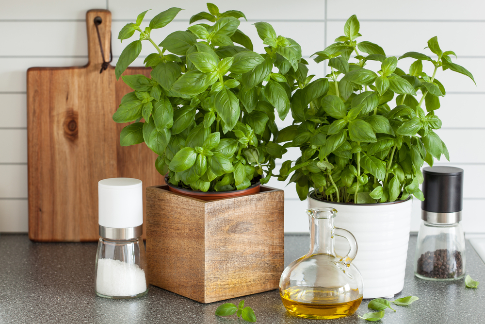 An image of herbs on a kitchen benchtop.