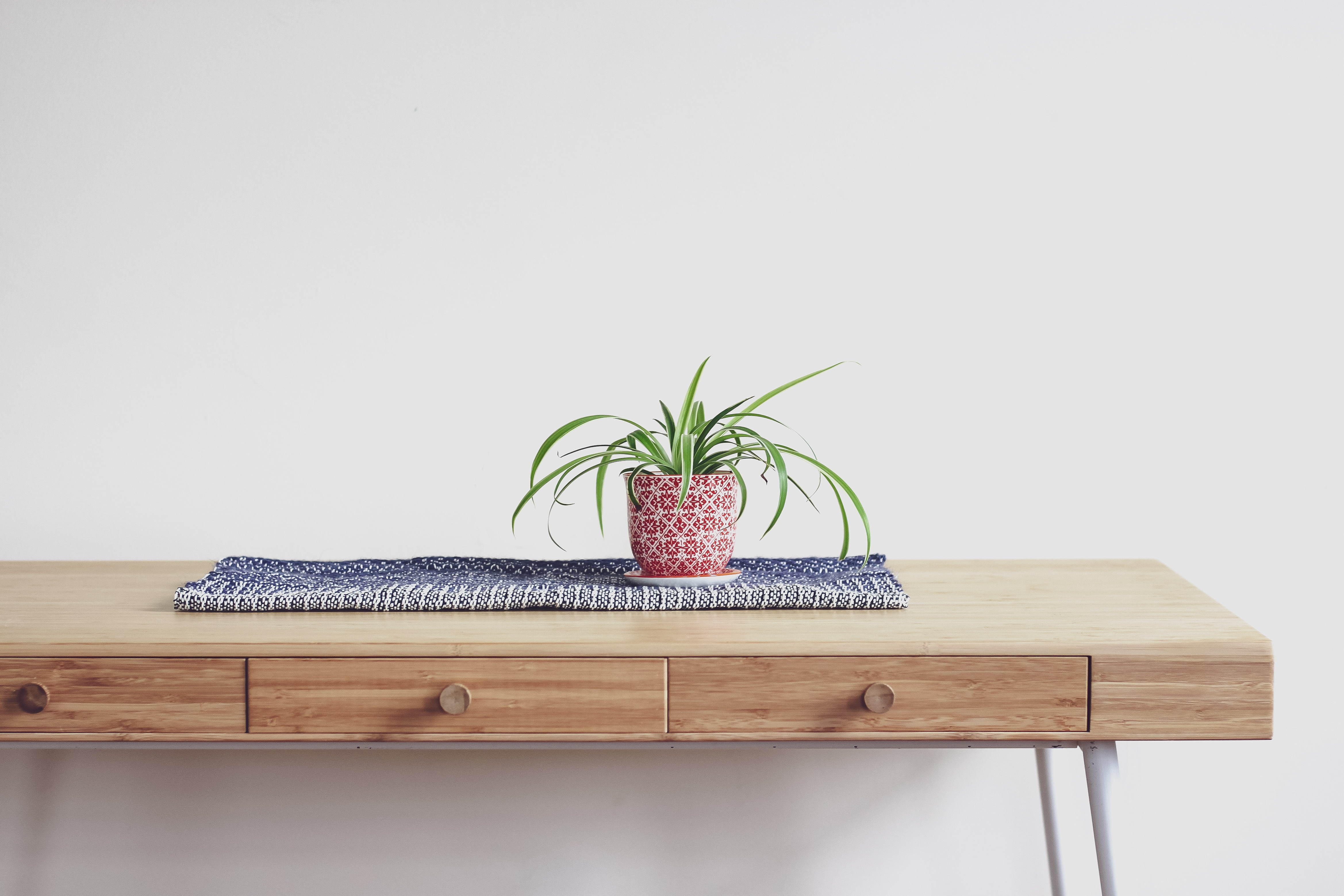 An image of a Spider Plant on a wooden table.